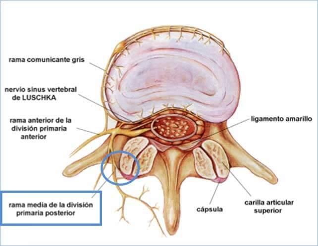 El dolor en la espalda pasa a la inclinación